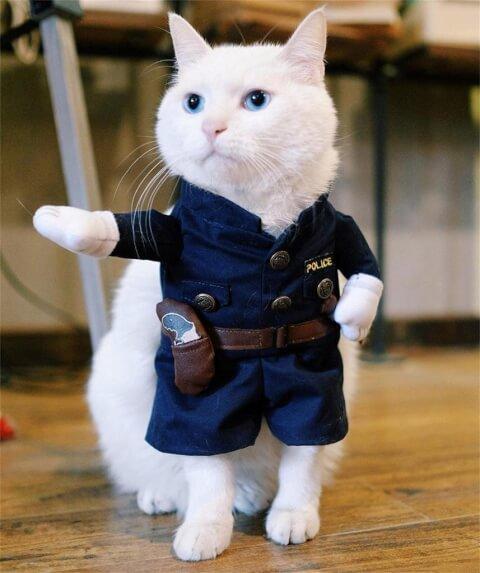 猫 警察服
