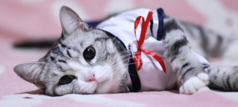 猫用セーラー服