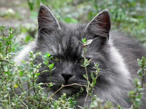 猫 縄張り