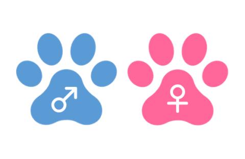 猫オスメス記号