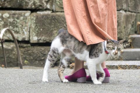 猫 すりすり 飼い主 人間