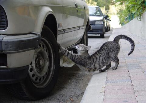 猫 爪とぎ 車