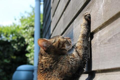 猫 外 爪とぎ