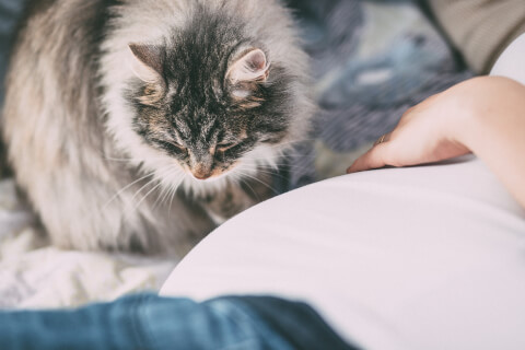 長毛の猫と女性の手