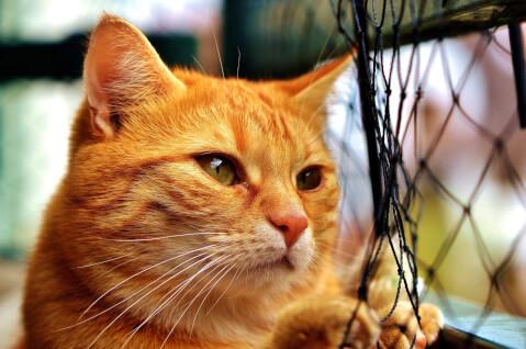 手前に網があるオレンジ色の猫