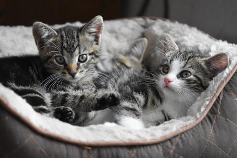 猫用ベッドの中にいる子猫2匹