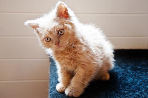 ふわふわの毛の子猫