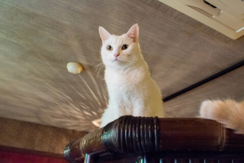 猫cafeぐるぐる堂3