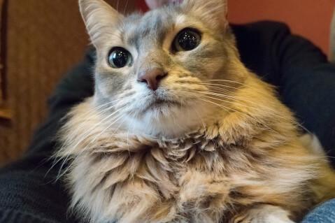 猫cafeぐるぐる堂4