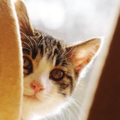 のぞいている猫