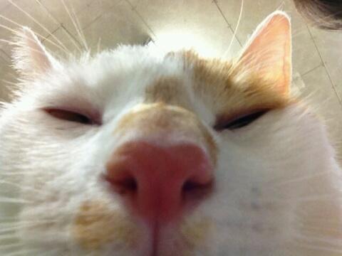 猫くさい顔