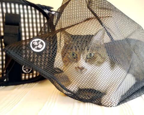 猫壱猫おちつくネット