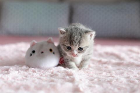 子猫とぬいぐるみ