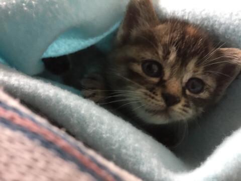 子猫とタオル