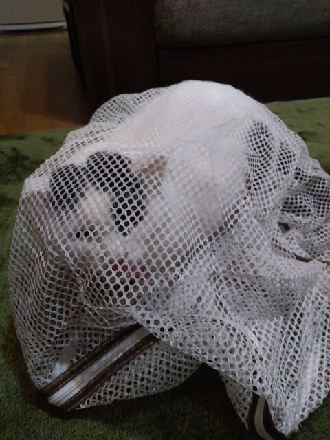 洗濯ネットに入る猫