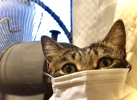マスクする猫