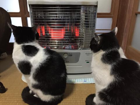 ストーブ前の猫二匹