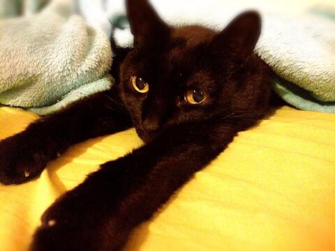 伸びる黒猫