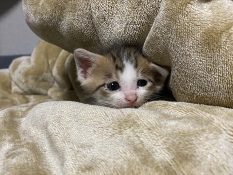 子猫と布団