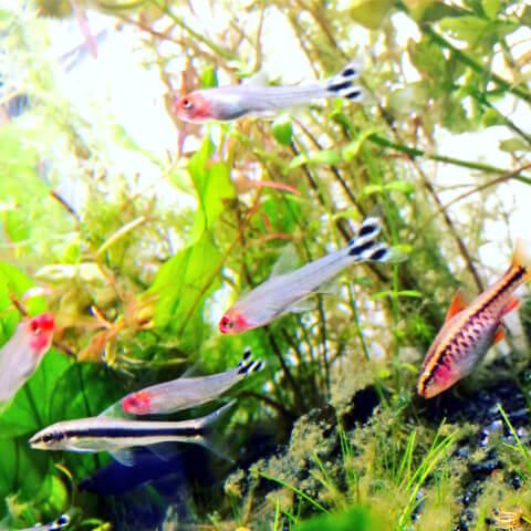 熱帯魚の群れ・四角形の画像