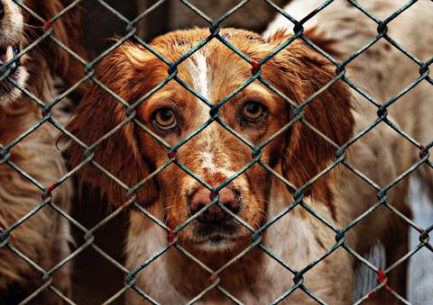 収容された犬