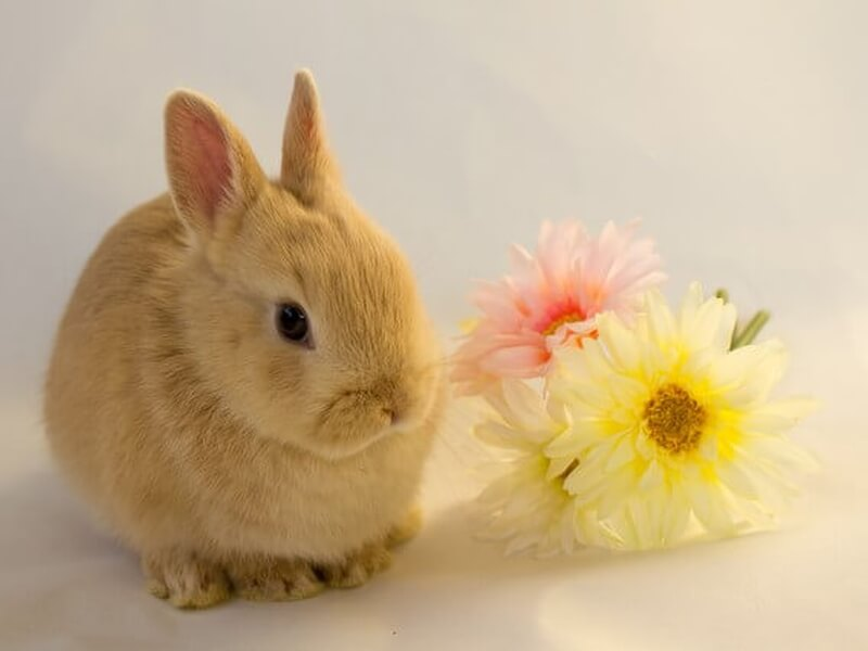花とうさぎ