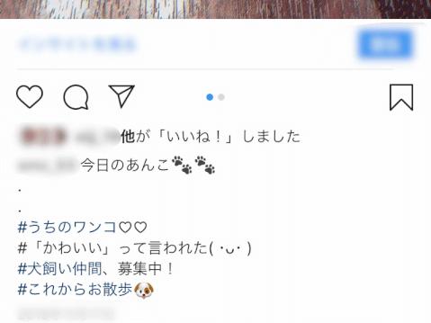 犬_Instagram_Twitter_ハッシュタグ_写真_SNS_コツ_初心者_使い方
