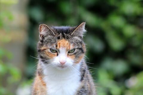 oldcat