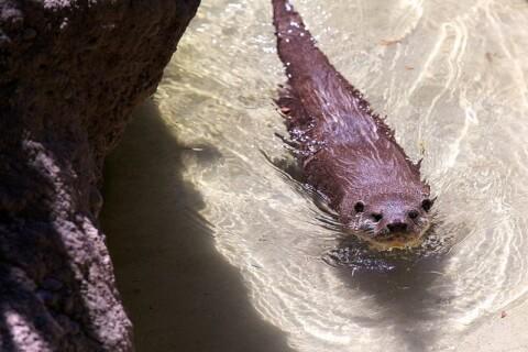 otter_water.jpg