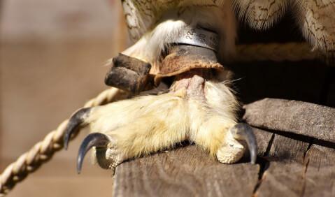 フクロウの足アップ