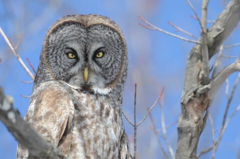 owl-06