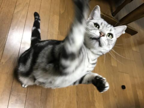 palying_cat