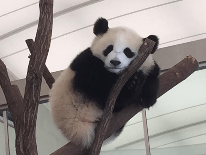 動物園 パンダ 上野