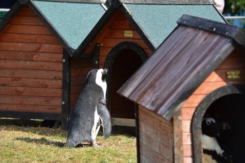 犬小屋とペンギン