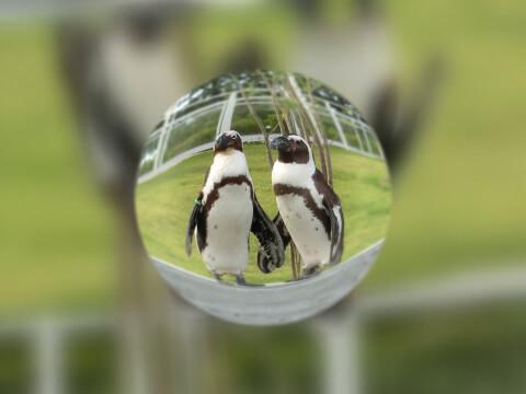 水滴とペンギン