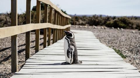 ビーチとペンギン