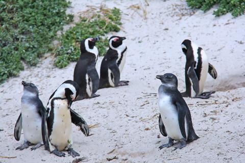 元記事より 陸上で休む6羽のペンギン