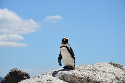 ペンギン陸