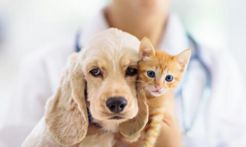 ペット 里親 犬 猫 トライアル 募集