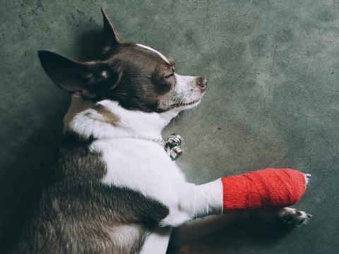 ペット 保険 動物病院 仕組み 比較 鳥