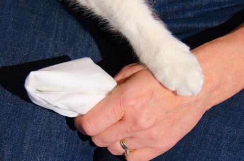 ペット 葬儀 費用 流れ ポイント