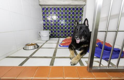 ペットホテル 料金 利用方法 選び方 犬 猫