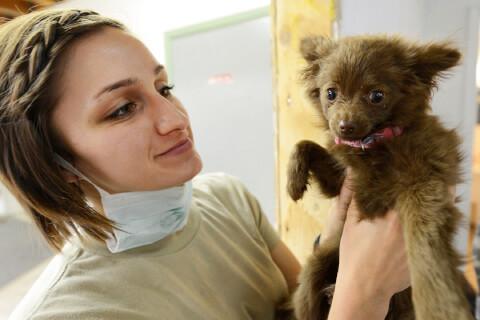 動物病院 症状