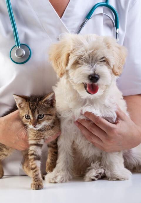 動物病院 来院時間
