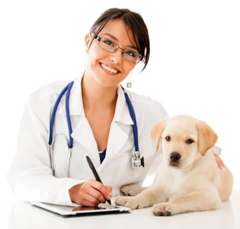 動物病院のかかり方