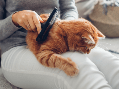 ペットシッター 料金 猫 犬 申し込み 方法 トラブル