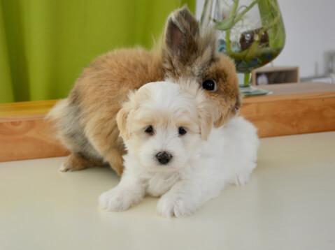 犬とウサギ