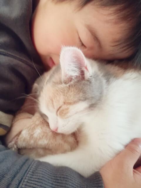子猫と子ども