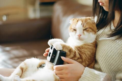 猫とくつろぐ女性