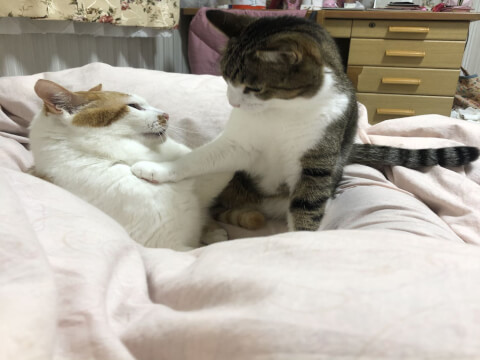 playing_cats